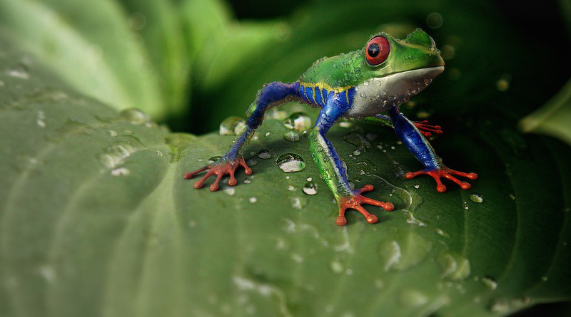 tree Frog Amphibians Animal Animal World Exotic