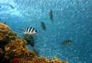 coral reef ocean Fish Underwater Diving Water Underwater World Sea