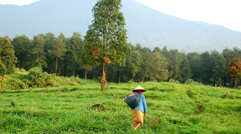 farm java indonesia