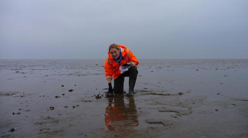 Jennifer Welsh during fleld work at the Wadden Sea CREDIT NIOZ