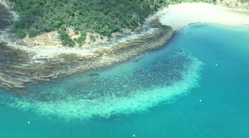 Bleached reef at Kepples, QLD, Australia in March 2020. CREDIT ARC Centre of Excellence for Coral Reef Studies