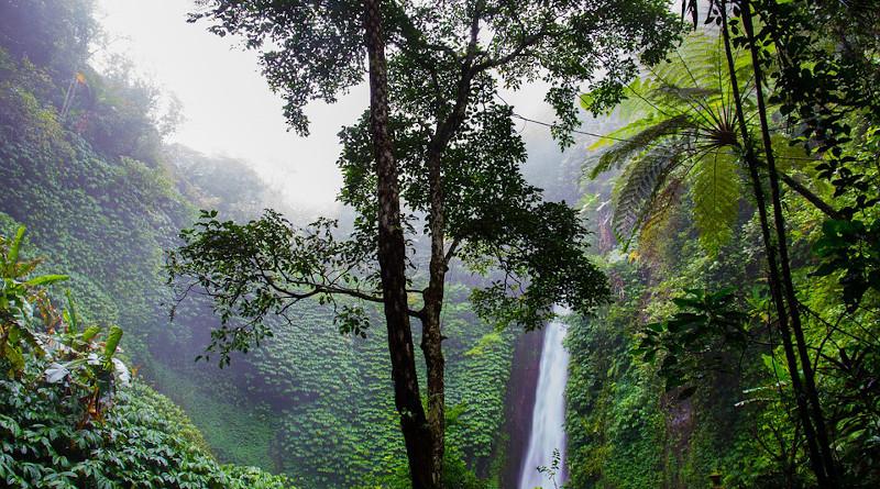 Waterfall Rainforest Forest Nature Ferns Jungle