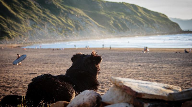 Dog Spain Beach Pet Quadruped Animal World Rock