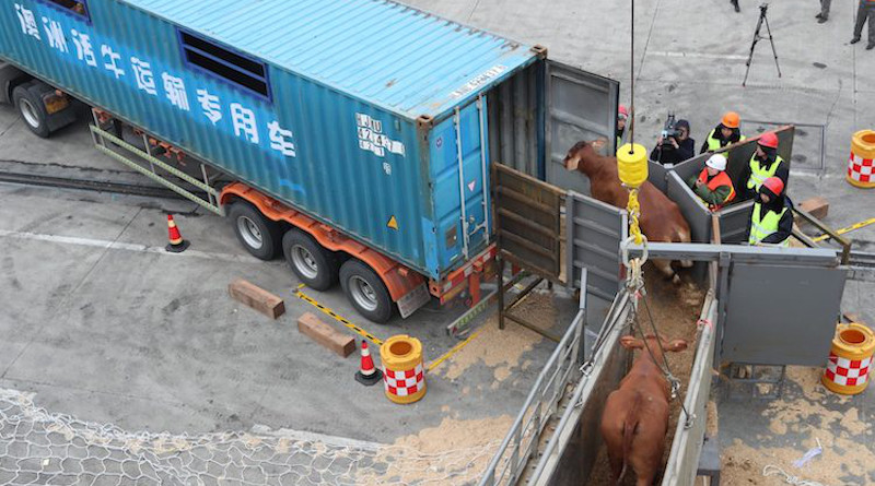 Beef cattle imported from Australia are being transported on to a truck in a port in east China's Zhejiang province. January 28, 2018. Source: East Asia Forum.