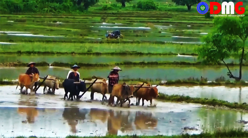Farmers in Arakan State, Myanmar. Photo Credit: DMG