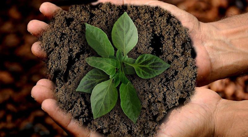 Earth Scion Leaf Sustainability Nature Plant