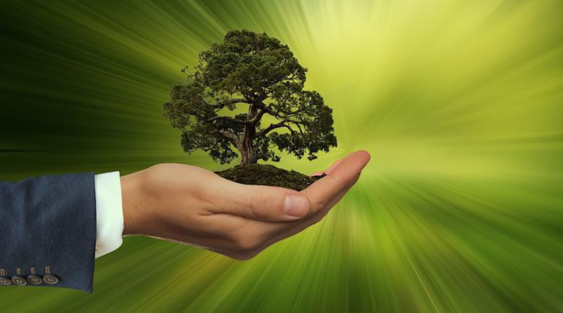 Sustainability Hand Keep Tree Energy Globe