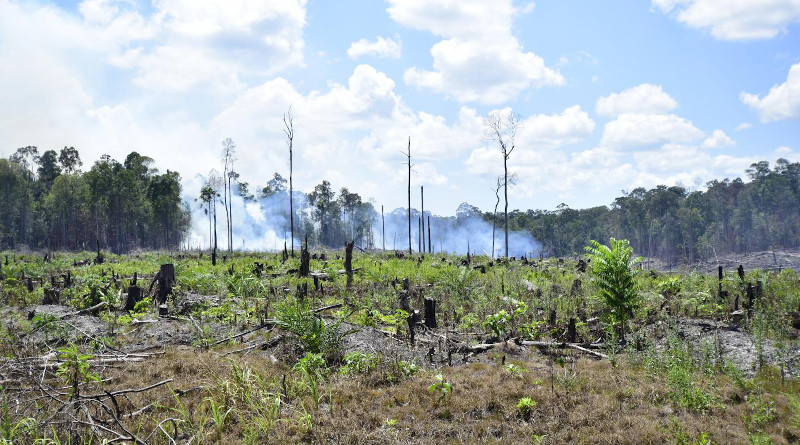A new study found that Indonesia's national anti-poverty program reduced deforestation in participating villages by about 30%. CREDIT: Mahastra Wibisono
