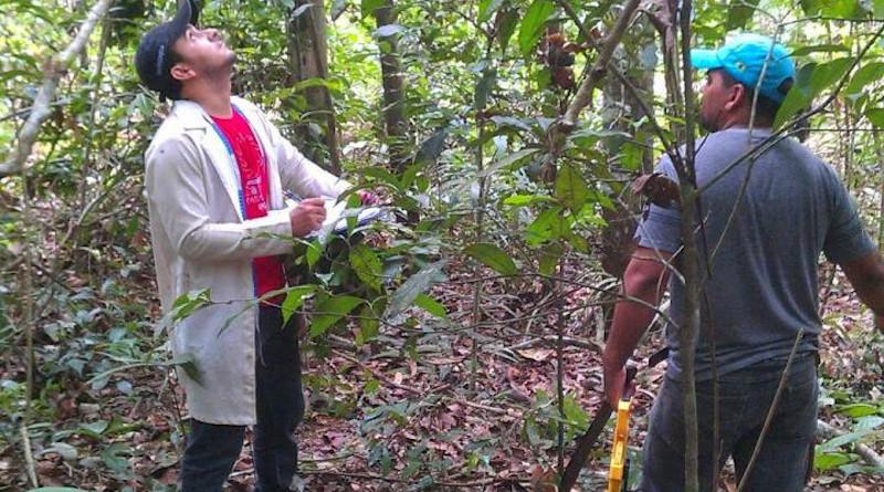 Examining forest species CREDIT: Dr Edmar Almeida de Oliveira