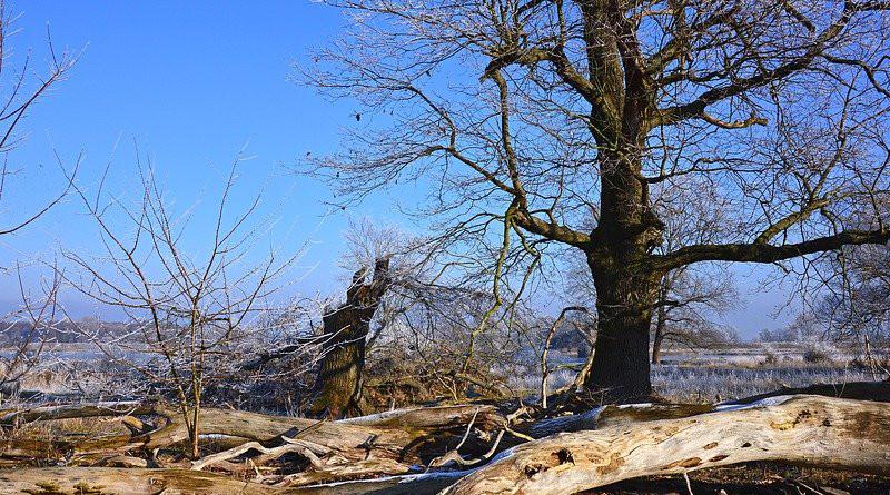 Nature Landscape Trees Tree Trunks Wood Dead Wood
