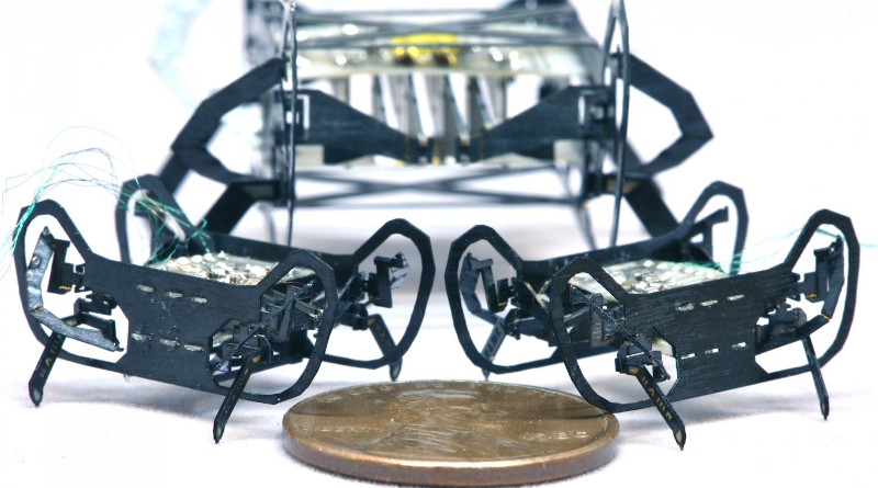 The newly designed HAMR-Jr alongside its predecessor, HAMR-VI. HAMR-Jr is only slightly bigger in length and width than a penny, making it one of the smallest yet highly capable, high-speed insect-scale robots. CREDIT: (Image courtesy of Kaushik Jayaram/Harvard SEAS)