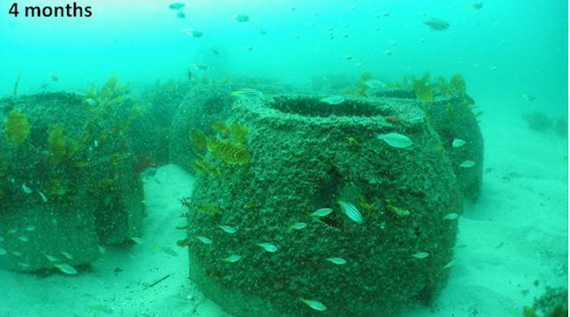 Artificial reefs shown four months after installation. CREDIT: UNSW Science
