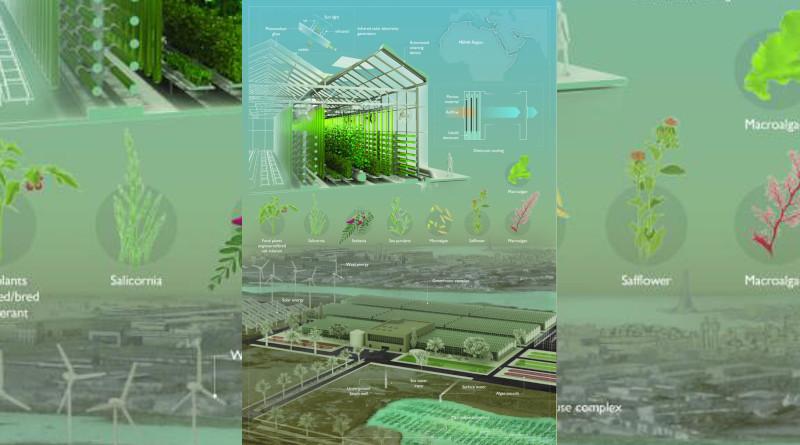 Controlled-environment agriculture combines energy-efficient, transparent solar panels; low-energy desiccant cooling; salt-tolerant edible plants; and algal biotechnology. CREDIT: © 2020 KAUST; Ivan Gromicho