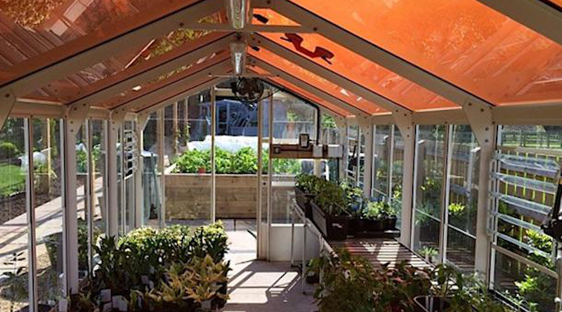 Greenhouse with tinted solar panels. CREDIT: Paolo Bombelli/University of Cambridge