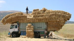 Morocco Truck Hay Work Agriculture
