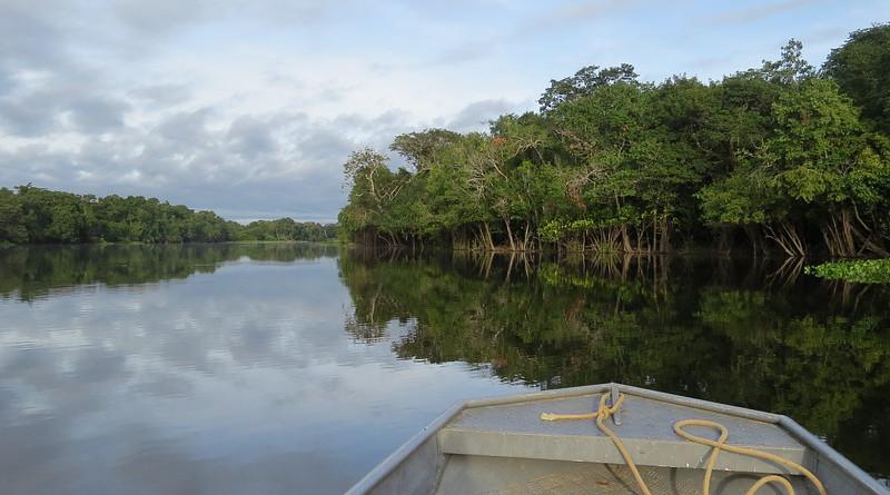 Brazil Rio Guaporé Amazon Nature Boat Jungle Forest