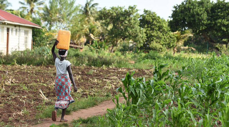 Farm Water Woman Fetching Girl Female People Africa