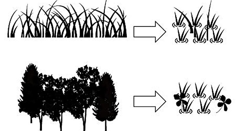 Rice paddies which were originally wetland are able to provide a new home for the original wetland plant species that were present. Conversely, paddies which were not originally wetland are a better home for non-wetland species. CREDIT: Tokyo Metropolitan University