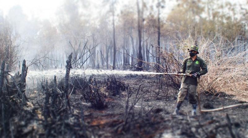 Forest fire in Sebangau. Credit Borneo Nature Foundation, Suzanne Turnock