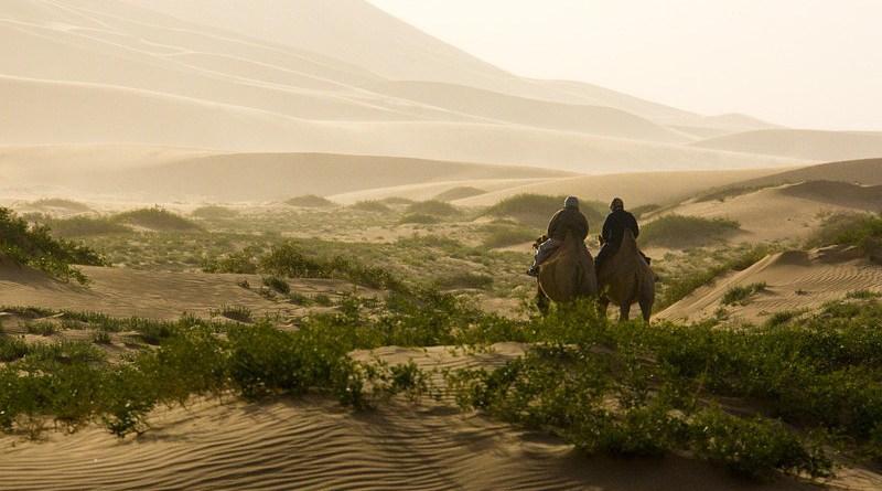 desert camel mongolia