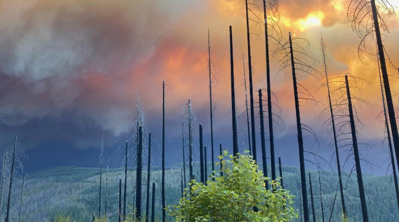 A view of the Riverside Fire from La Dee Flats on the Mt. Hood National Forest on Sept. 9, 2020. The fire encompassed over 138,000 acres, largely on the Mt. Hood National Forest. CREDIT: U.S. Forest Service - Pacific Northwest Region