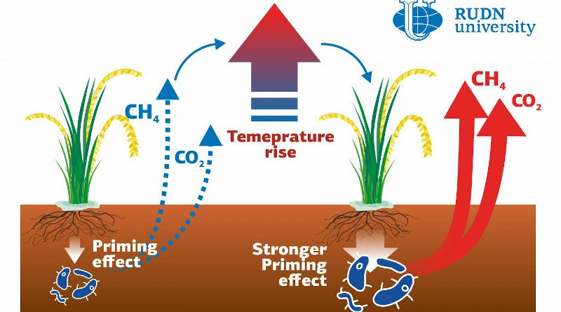 A soil scientist from RUDN University studied the decomposition of organic matter in rice paddies--the sources of CO2 and methane emissions. Both gases add to the greenhouse effect and affect climate warming in subtropical regions. The emissions increase when the roots of plants influence microbial communities in the soil. This influence, in turn, depends on temperature changes. Therefore, climate warming can lead to more greenhouse gas emissions. CREDIT RUDN University