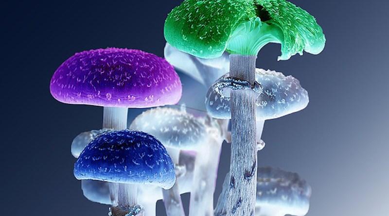 Mushrooms Psychedelic Nature Fungi Magic