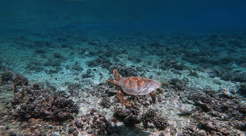 Reefs will struggle to keep up with the current trajectory of warming and ocean acidification. The impacts by the end of the century include 'insidious and accelerated loss of coastal protection under unmitigated CO2 emissions'. CREDIT: Kristen Brown.
