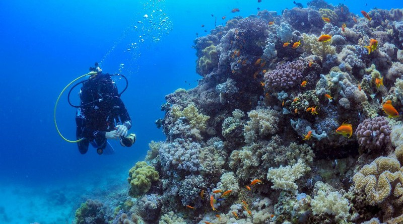 Nils Rädecker spent more than a year studying a coral reef just off the coast of Thuwal, Saudi Arabia. He then replicated these environmental conditions in the aquaria at the Red Sea Research Center. CREDIT Nils Rädecker