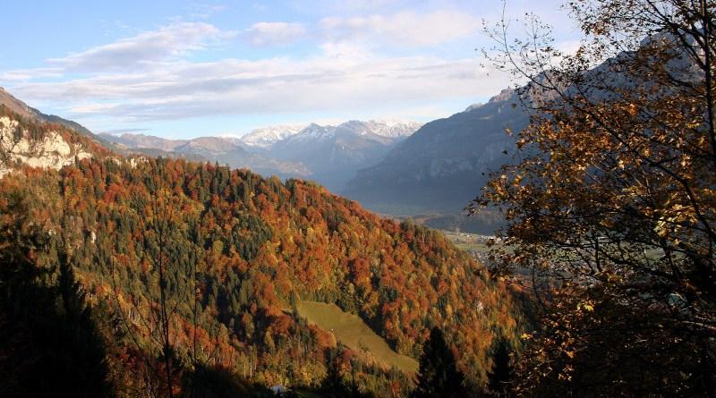 Species-rich mixed deciduous forest near Brienz (Canton Bern, Switzerland). Photo: Reinhard Lässig / WSL