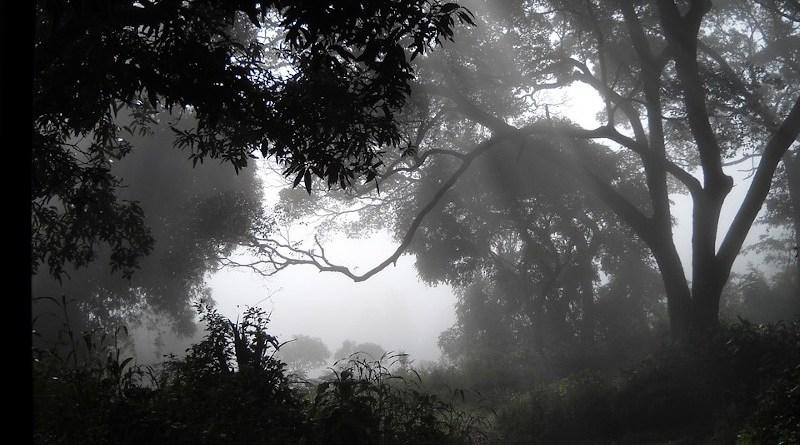 Woods Fog Guinea Mist Africa Dalaba Somber
