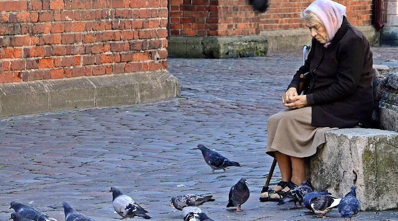 Elderly Old Lady Woman Feeding Pigeons Riga Latvia