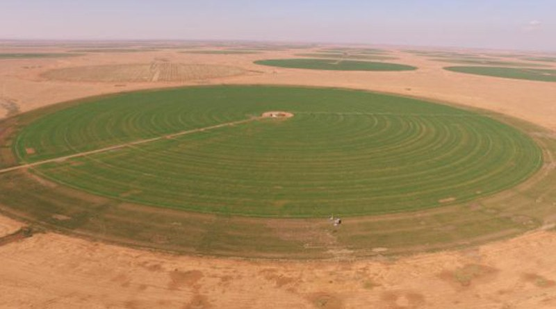 Crops in Saudi Arabia are often irrigated via center pivots that tap underground aquifer sources, which are rapidly depleting. CREDIT © 2021 KAUST; Prof. McCabe's HALO Research Group