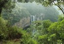 Brazil Forest Waterfall Trees Green Landscape Vegetation