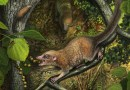 Shortly after the extinction of the dinosaurs, the earliest known archaic primates, such as the newly described species Purgatorius mckeeveri shown in the foreground, quickly set themselves apart from their competition -- like the archaic ungulate mammal on the forest floor -- by specializing in an omnivorous diet including fruit found up in the trees. CREDIT Andrey Atuchin