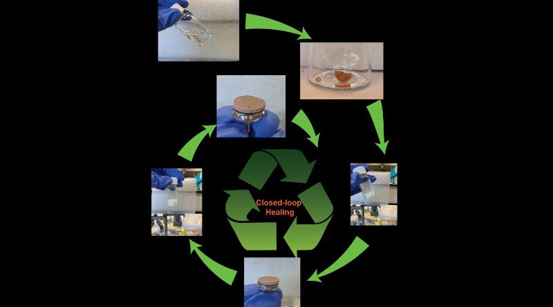 The new, vitrimer membrane is made by pressing and sintering of polymers from the natural monomer malic acid. This membrane can be recycled by ball milling and subsequent pressing and sintering. CREDIT Chongnan Ye, University of Groningen