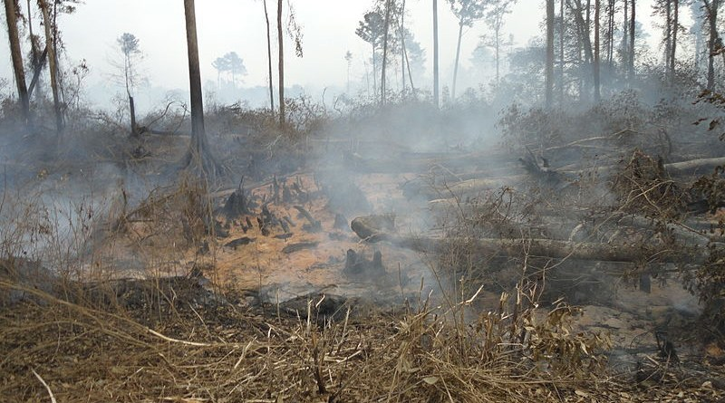 Smoke rises from a fire burning deep in peat soils at the Lateral West Fire on Great Dismal Swamp National Wildlife Refuge. Credit: Chris Lowie/USFWS