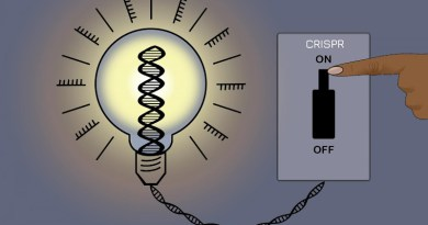 A new CRISPR method allows researchers to silence most genes in the human genome without altering the underlying DNA sequence -- and then reverse the changes. CREDIT Jennifer Cook-Chrysos/Whitehead Institute