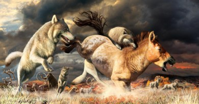 Gray wolves take down a horse on the mammoth-steppe habitat of Beringia during the late Pleistocene (around 25,000 years ago). CREDIT Julius Csotonyi