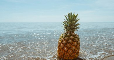 Pineapple Beach Tropical Coast Fruit Ocean Sea