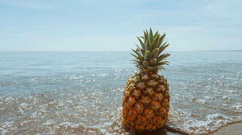 Pineapple Beach Tropical Coast Fruit Ocean Sea
