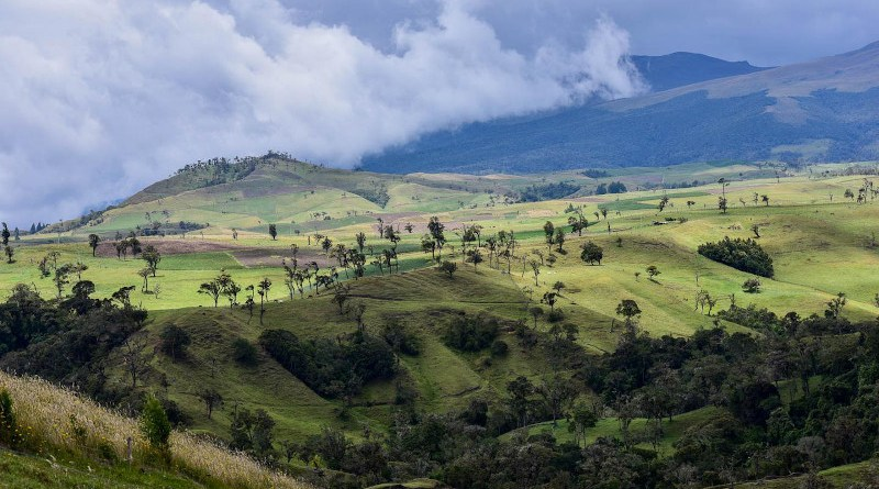 Scientists note that climate change is expected to impact 58% of montane forest in the Peruvian Andes. CREDIT Alliance of Bioversity and CIAT / N.Palmer