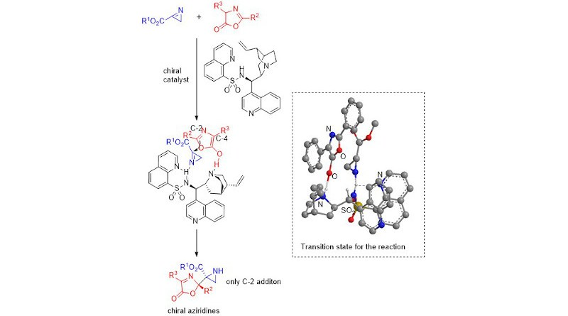 Scientists from Japan recently proposed a possible transition state for the reaction between aziridines and oxazolones in presence of a cinchona alkaloid sulfonamide catalyst, producing desirable aziridine-oxazolone compounds with high yields and enantioselectivity or purity Image courtesy: Shuichi Nakamura from NITech
