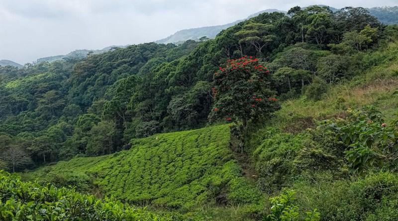 Sri Lanka Sinharaja Forest Preserve. CC BY-SA 2.0