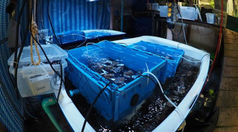 Experimental facility for developing and testing microbiome transplantation methods. Innovative microbiome-based strategies for corals might soon help them survive heat waves for a short time. CREDIT A. Roik.