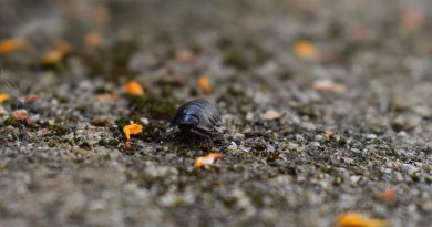 Insect Woodlouse Close Bug