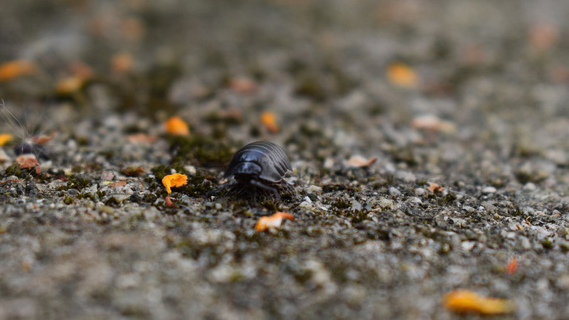 Sunday And Woodlice – OpEd