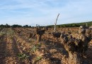 Farm Soil Vineyard Cuenca Wine Grape Agriculture Spain Wine