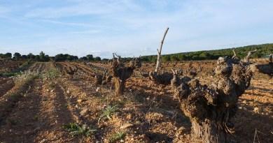 Farm Soil Vineyard Cuenca Wine Grape Agriculture Spain Wine