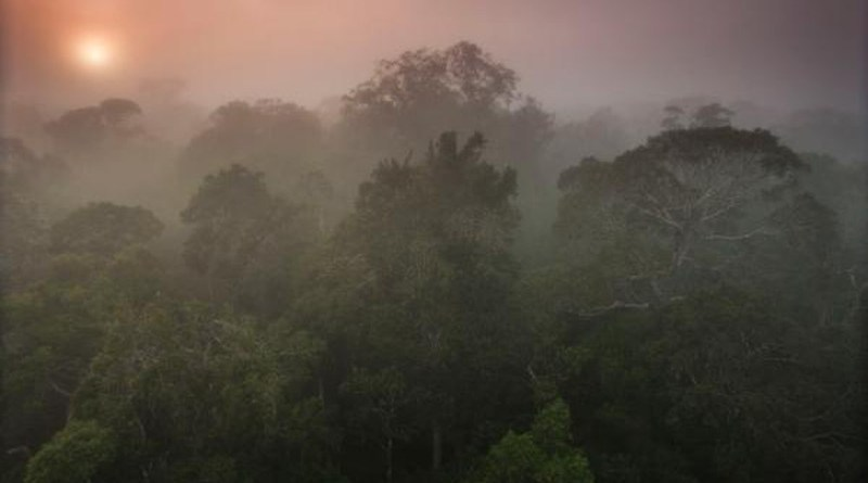 Direct impact of rising levels of carbon dioxide over the Amazon rainforest would be a reduction in rainfall equivalent to or even greater than the impact of complete substitution of the forest by pasture CREDIT João Marcos Rosa/AmazonFACE